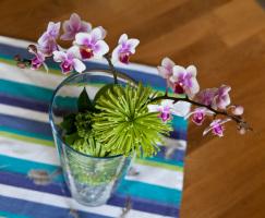 orkide-vattenpärlor2